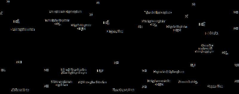 강아지의 행동교정에 이용될 수 있는 아미노산 트립토판과 타이로신 마이펫칼럼
