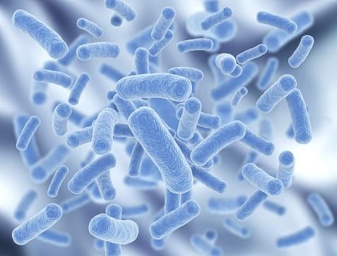 bacteria-probiotics-sports-nutrition.jpg