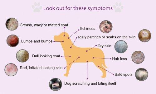 Allergy-sympytom-chart.jpg