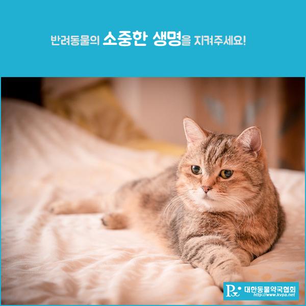 대한동물약국협회_3.png